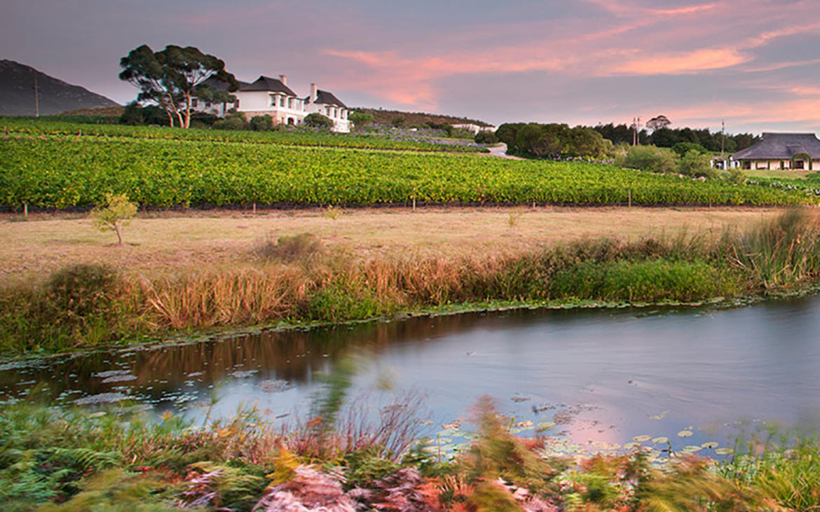 Harvest exchange in Bouchard Finlayson winery in South Africa with award winning winemakers PETER FINLAYSON and CHRIS ALBRECHT!