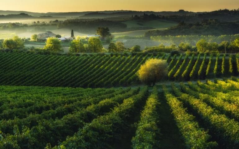 (Italiano) Vino e Gusto: Poggio del Moro e Andrea Bocelli, eccellenze made in Italy
