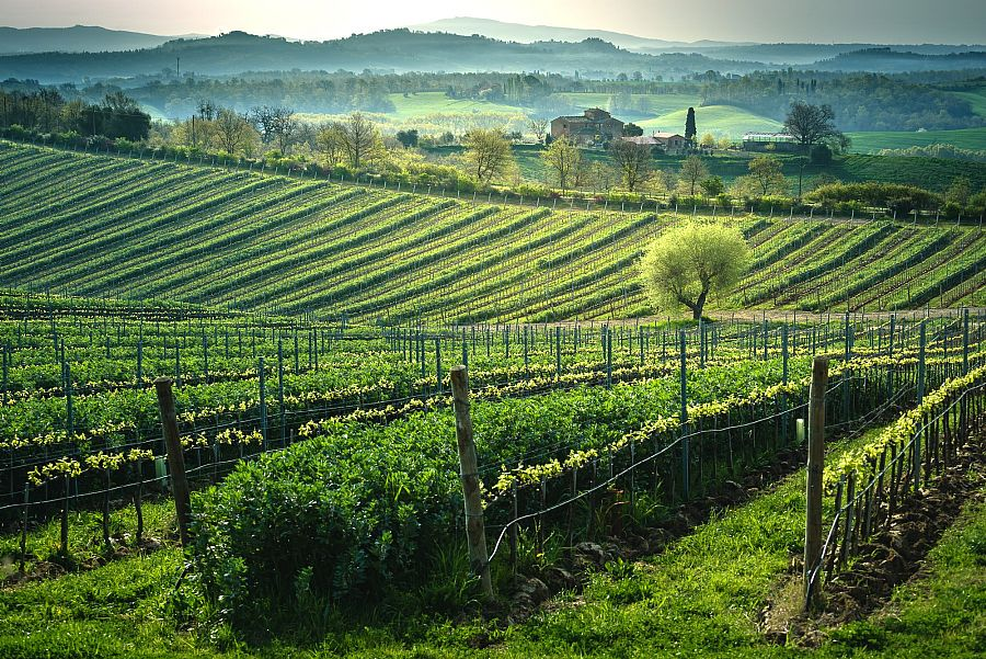Summer in Italy: welcome to Poggio del Moro Winery