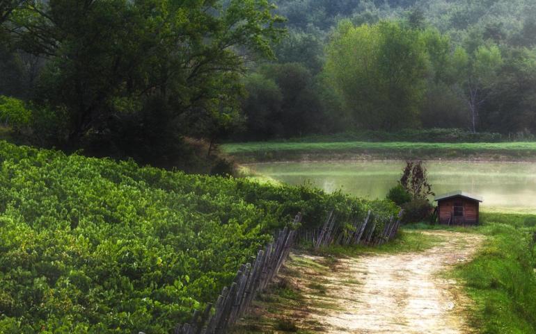 """Festa delle Donne del Vino 2020 – Degustazione """"EN PLAIN AIR"""" presso il piccolo lago di POGGIO DEL MORO"""