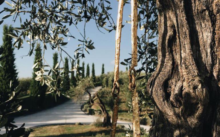 Nella cantina Poggio del Moro Vino, Arte e Natura ancora una volta insieme